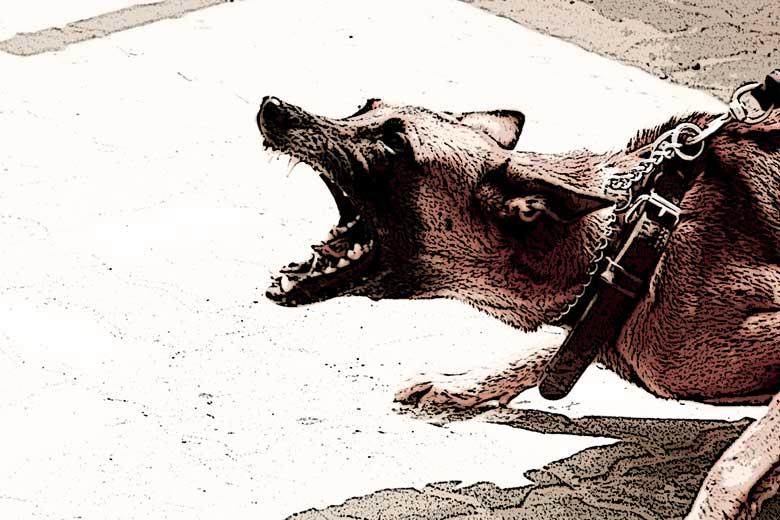 La derrota del matón, de la novela El dragón y la rosa