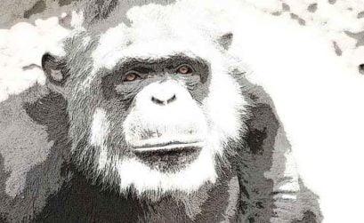 Charla con un viejo chimpancé, entre de qué día el de aquella noche, una novela de Ignacio León Roldán